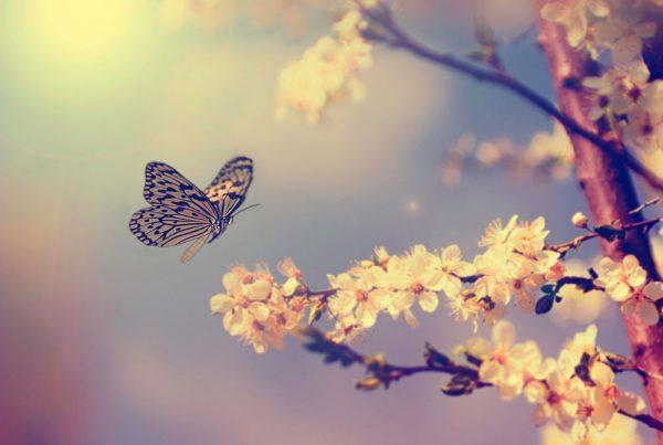 butterflies-as-a-spirit-guide